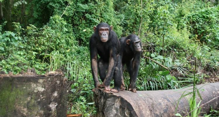 Lwiro Primate Rehabilitation Centre