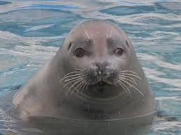 【気になるニュース】Scared seal hides on boat from killer whales CNNより