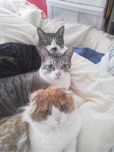 【元添乗員ふきこのブログ】My lovely cats and turtle