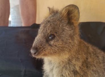 【キースのブログ11】A Month in Australia, Rottnest Island