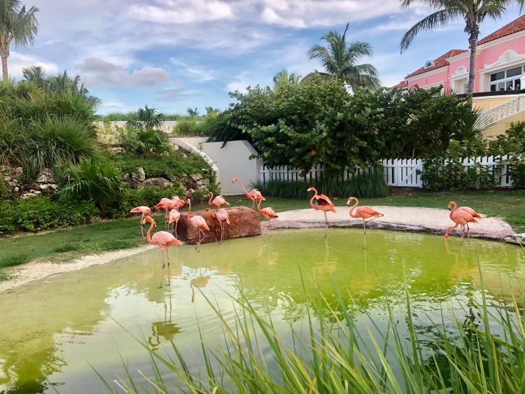 Bahamas Vacation 2018