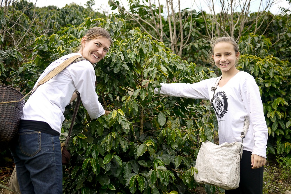 sustainable responsible travel and voluntourism in thailand with akha ama coffee