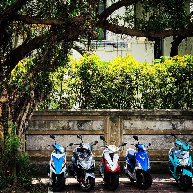 Taipei mopeds under tree
