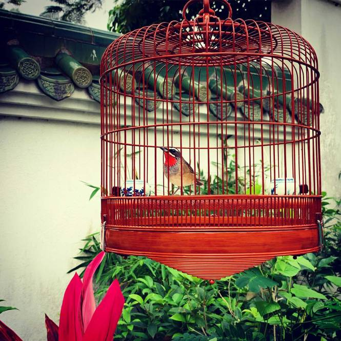 Yuen Po Bird Garden in Hong Kong