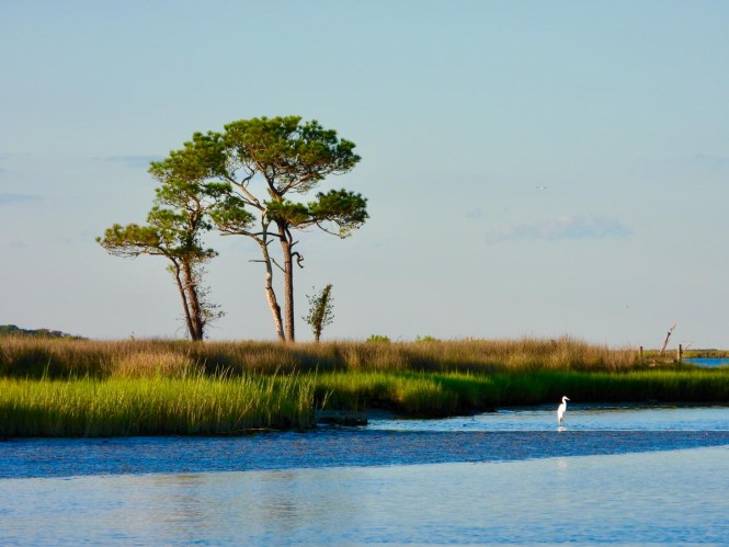 Smith Island view