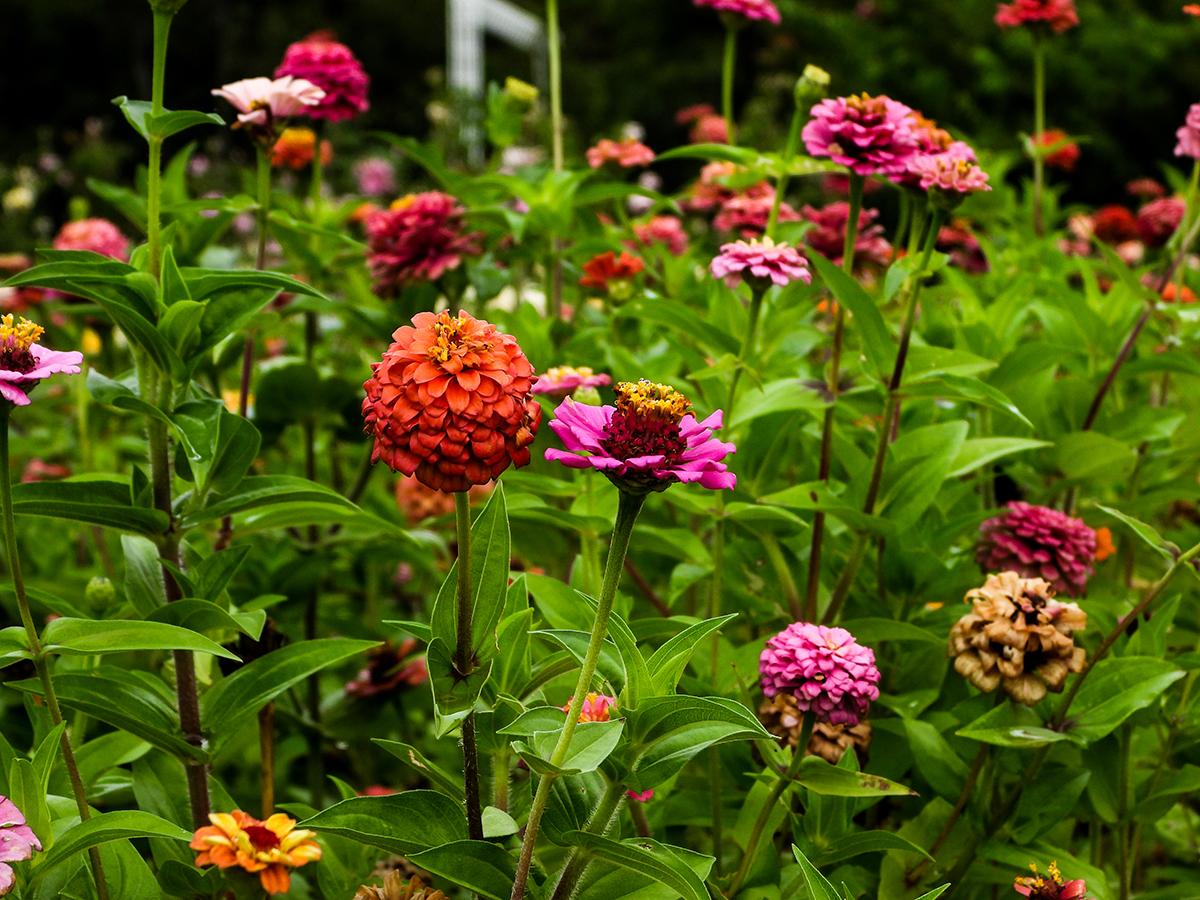 Lauritzen Gardens flowers