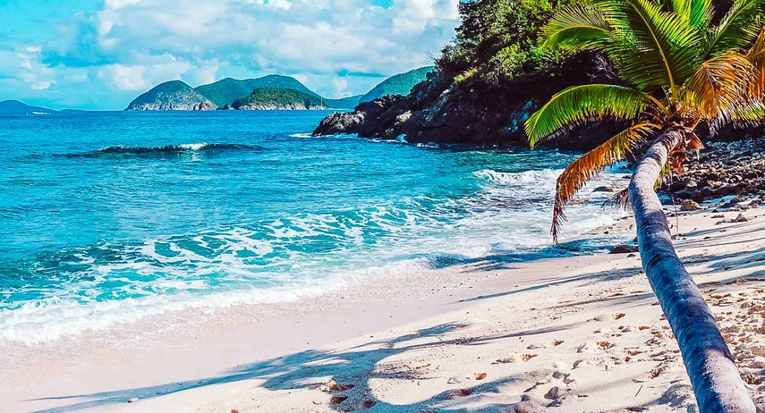 Palm tree on a beach in St. John, US Virgin Islands, one of the top Caribbean islands to visit