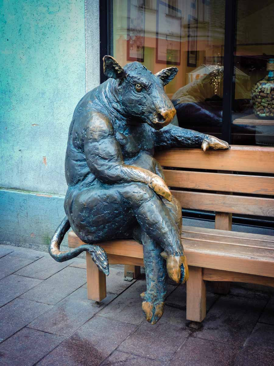Cute swine sculpture in Tallinn, Estonia