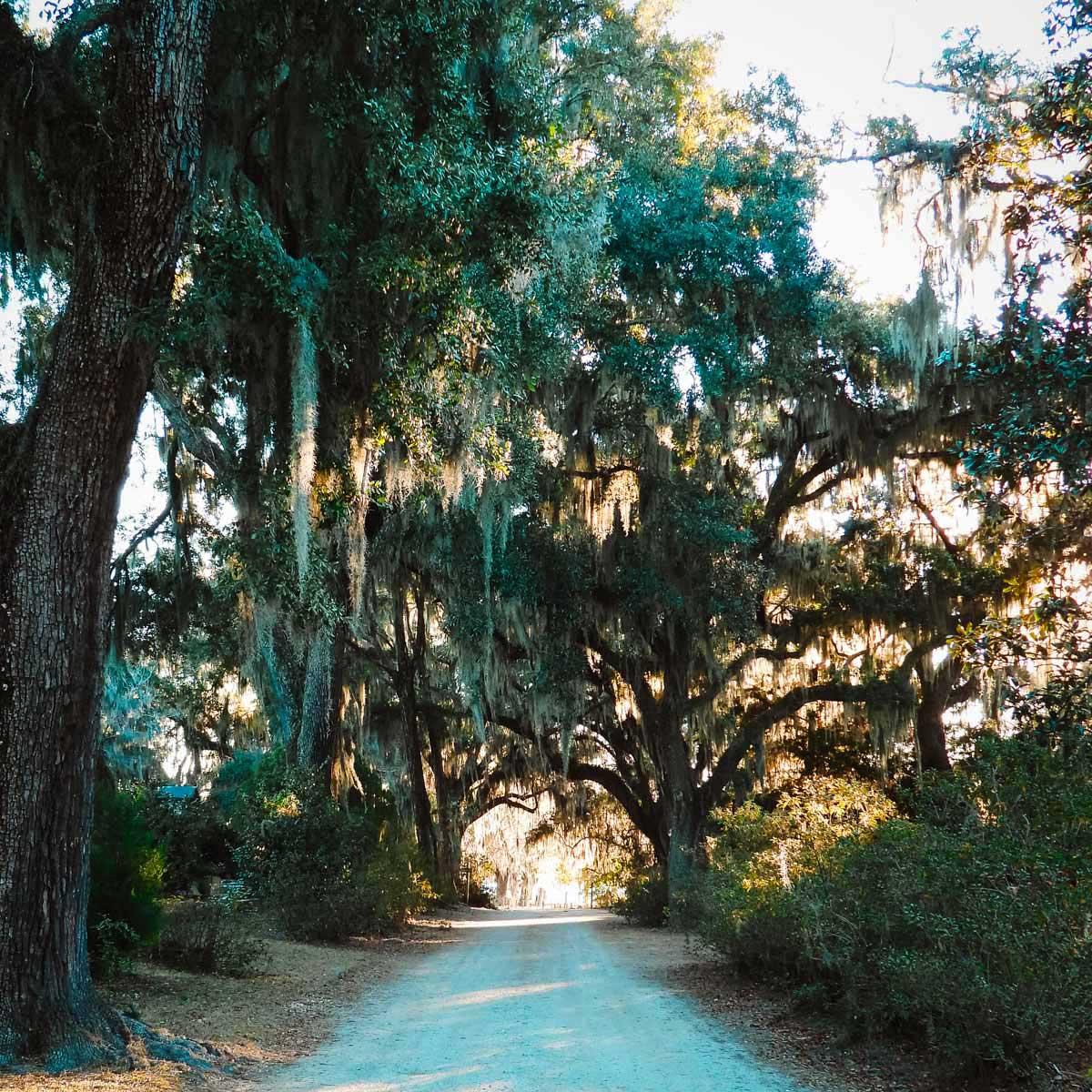 Peaceful road through Bonaventure Cemetery