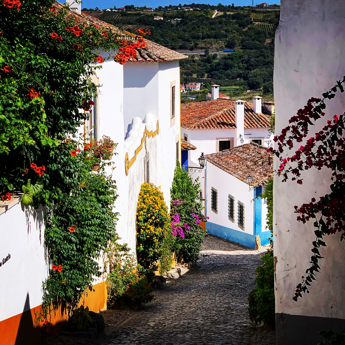 Colorful alley and plentiful flowers in Obidos