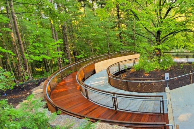 A curving boardwalk element in a lush green forest in a shot of one section of the Valley Land Trail, a fully wheelchair accessible nature trail at UTSC.