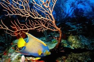 VIA VENTURE Belize Diving Belize c Anthonys Key Resort  5