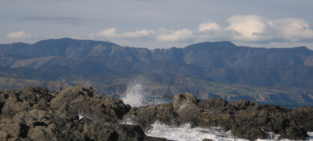 Seal Colony at Red Rocks Reserve, Wellington
