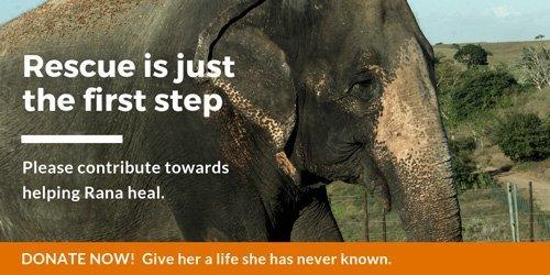 Rana's Care Campaign