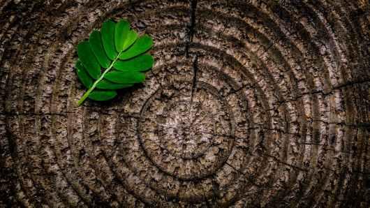 green leaf plant on brown wooden stump