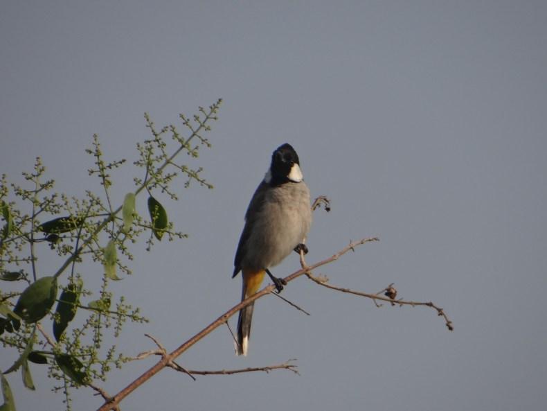 Rajasthan: Birding in Bharatpur - Keoladeo Ghana National Park