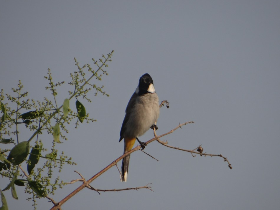 Rajasthan: Birding in Bharatpur - Keoladeo Ghana National Park