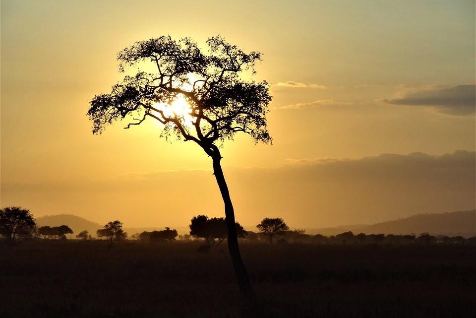 """7 Gründe, das Buch """"Riwan oder der Sandweg"""" von Ken Bugul zu lesen"""