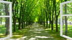 window opened to the beautiful city park with path and green trees