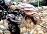 Snail Finds Love in Abidjan