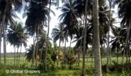 Road to Grand Bassam, Ivory Coast