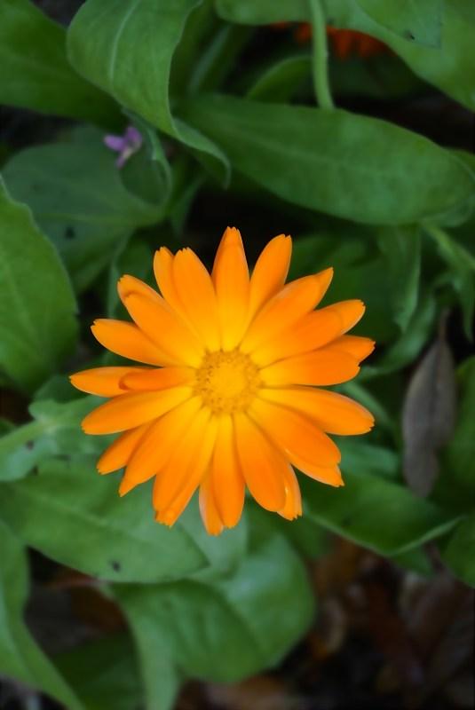 Leu Gardens flower