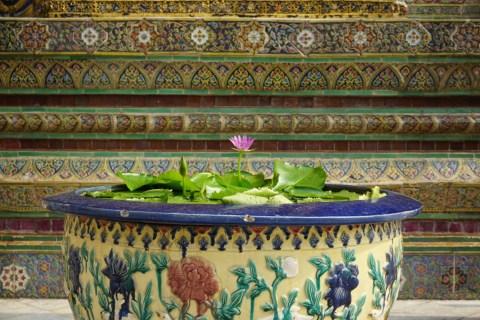 Lotus flower at Wat Phra Kaew