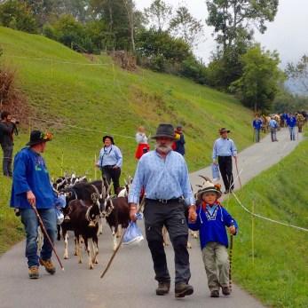 Swiss Goats Descend