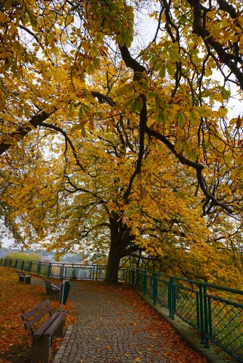 *Fall Leaves