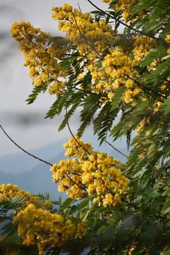Nepal floral diversity