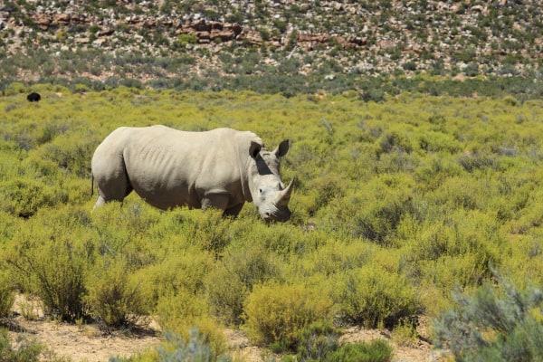 Save a Rhino
