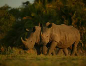 Help us save a rhino and win amazing prizes #JustOneRhino