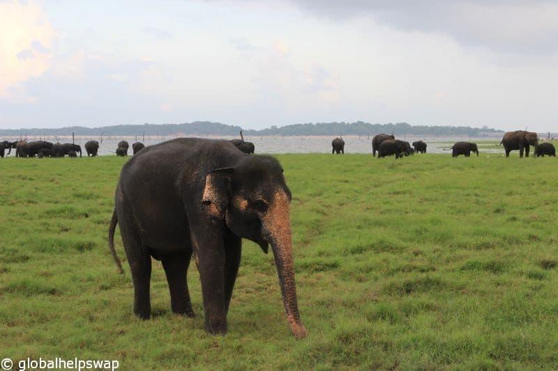Volunteering in Sri Lanka