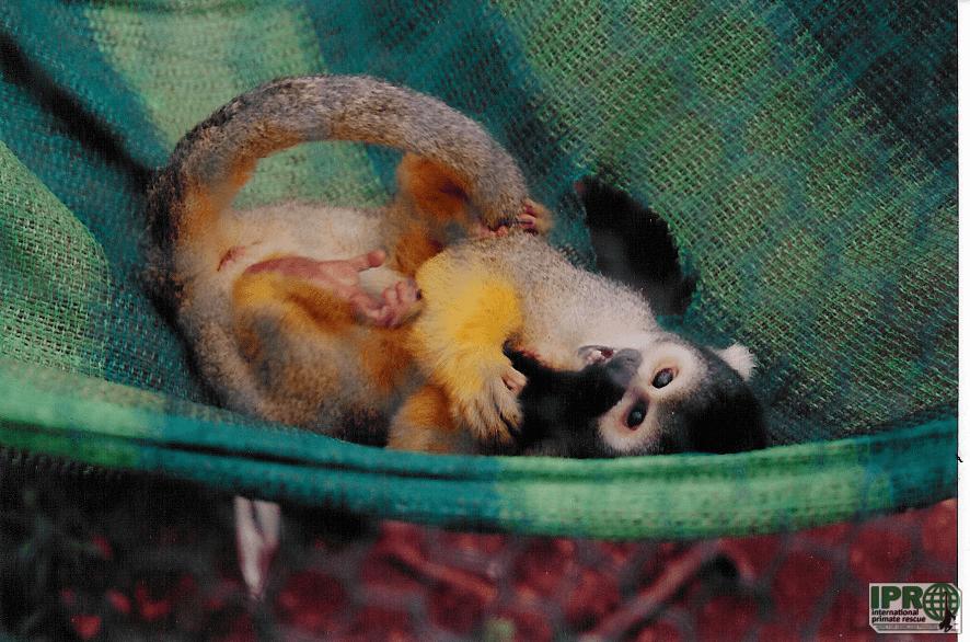 Volunteer with monkeys