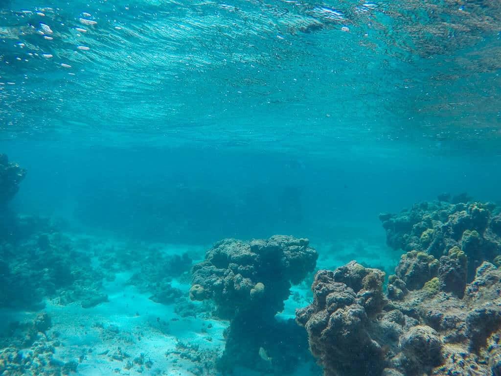 Snorkelling in Antigua