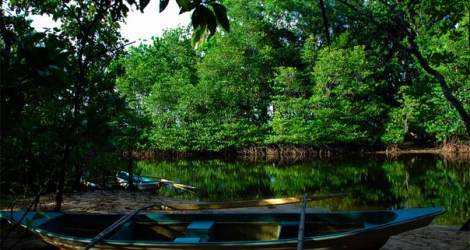 Sabang: Mangrove Forest