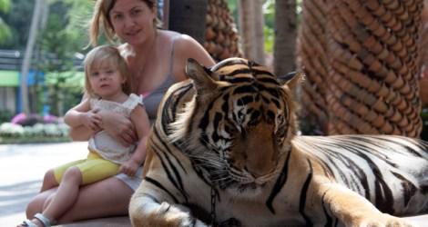Tiger Traps