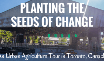 During an urban agriculture tour, I share the transformative power of urban agriculture which includes transforming derelict lots into vibrant community spaces, growing fresh produce at low cost & bring nature back to cities