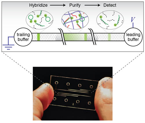 Integration of On-Chip Isotachophoresis and Functionalized Hydrogels for Enhanced-Sensitivity Nucleic Acid Detection- Global Medical Discovery