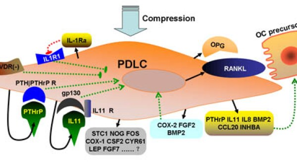 Analysis of time-course gene expression profiles of a periodontal ligament tissue model under compression- Global Medical Discovery
