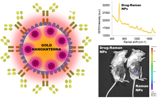 Antibody-drug gold nanoantennas with Raman spectroscopic fingerprints for in vivo tumour theranostics copy