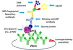 rapid efficient immunoenzymatic assay to detect receptor protein interactions: G protein-coupled receptors- global medical discovery
