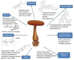 Anticancer substances of mushroom origin. - Global Medical Discovery