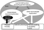 NrCAM regulating neural systems and addiction-related behaviors. - Global Medical Discovery