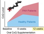 Coenzyme Q supplementation in pulmonary arterial hypertension
