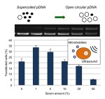 Serum influence on in-vitro gene delivery using microbubble-assisted ultrasound. - Global Medical Discovery