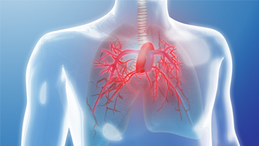 Deficiency of Akt1 but not Akt2 attenuates the development of pulmonary hypertension-. Global Medical Discovery