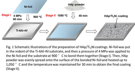 HAp Ti2Ni coatings of high bonding strength on Ti-6Al-4V prepared by the eutectic melting bonding method-	. Global Medical Discovery