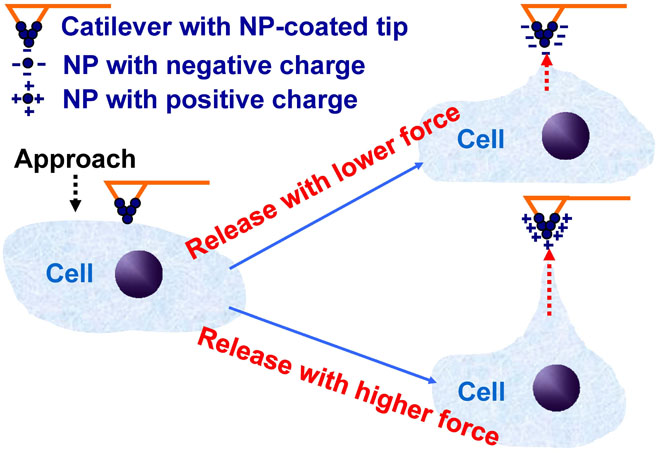 Global Medical Discovery polymeric nanoparticle zeta potential