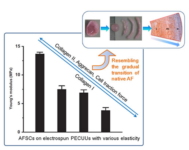 Modulation of gene expression of annulus fibrosus-derived stem cells using poly(ether carbonateurethane)urea scaffolds of tunable elasticity. Global Medical Discovery